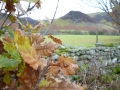 autumn-leaves-hopebeck